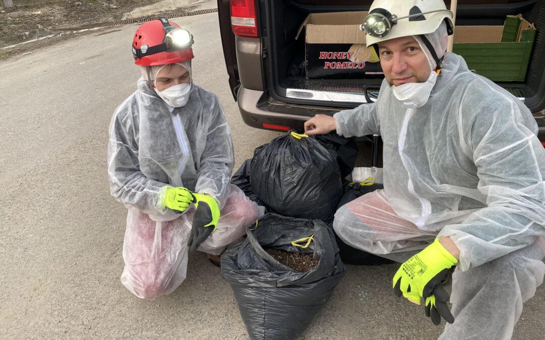 Bat workers in action – Romanian partner